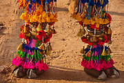 Camel dressing competition at the Desert Festival on 29th January 2018  in Jaisalmer, Rajasthan, India. It is an annual event that take place in February month in the beautiful city Jaisalmer. It is held in the Hindu month of Magh February, three days prior to the full moon.