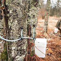 Alaska Birch Syrup