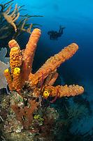 Diver and Yellow Tube Sponge...Shot in British Virgin Islands