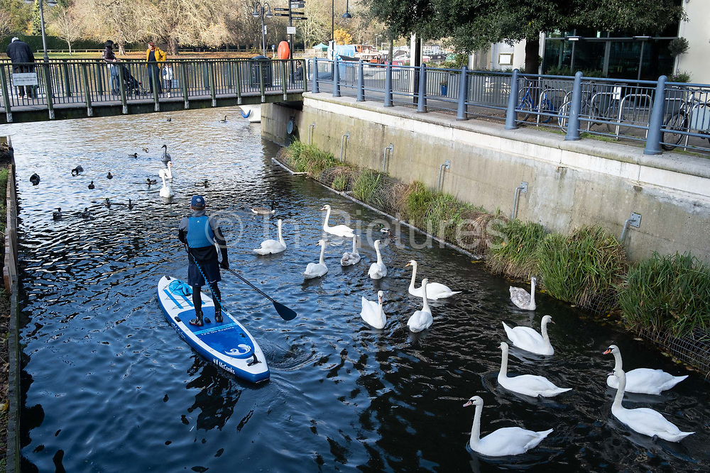 A middle-aged man paddles along the Hoggsmill River towards the Thames where swans wait for breadcrumbs from passing pedestrians in Kingston-upon-Thames, on 12th November 2020, in London, England.