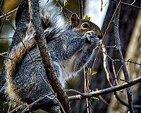 Squirrel with a nut on a sunny winter day. Backyard nature in New Jersey. Image taken with a Nikon 1 V1 camera, FT1 adapter, and 70-200 mm f/2.8 VRII lens (ISO 400, 200 mm, f/8, 1/160 sec).