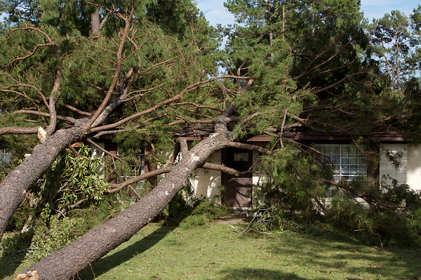 Stock photo of a tree fallen on a house during Hurricane Ike
