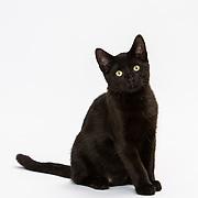 20191011 Michelle cats
