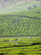 Tea pickers at a plantation in Munnar, a hill station in Kerala, India