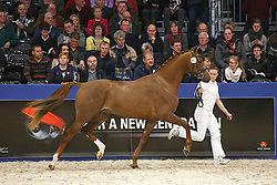 443 - Galandro<br /> KWPN Stallion Selection - 's Hertogenbosch 2014<br /> © Dirk Caremans