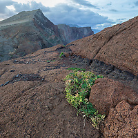 """According to """"Wikitravel"""" - Many unusual species of plants are found here and are best seen from the footpath, such as the Ice Plant, Everlasting, Cardoon and many more."""