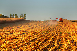 2018 corn and soybean harvest in Central Illinois.  Crops are golden brown and ready for picking in rural McLean County near the towns of Bellflower, LeRoy, Sabina and Glen Avon. Large combines, tractors, wagons and semi-trucks are used and take up a good portion of the narrow roadways.  Dust and debris flies as the crops are cut. Some images in this series have been digitally altered.  <br />