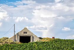 A potato field and an old potato storage shed.