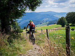 Mountain biker riding on a single trail in the forest