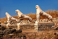 The Avenue of the lions in t he ruins of the Greek city of Delos, the birthplace of the twin gods Apollo and Artemis. Greek Cyclades Islands. .<br /> <br /> Visit our GREEK HISTORIC PLACES PHOTO COLLECTIONS for more photos to download or buy as wall art prints https://funkystock.photoshelter.com/gallery-collection/Pictures-Images-of-Greece-Photos-of-Greek-Historic-Landmark-Sites/C0000w6e8OkknEb8<br /> .<br /> Visit our ANCIENT GREEKS PHOTO COLLECTIONS for more photos to download or buy as wall art prints https://funkystock.photoshelter.com/gallery-collection/Ancient-Greeks-Art-Artefacts-Antiquities-Historic-Sites/C00004CnMmq_Xllw