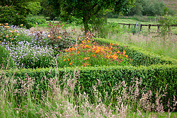 The parterre at Pettifers, Oxfordshire with Alstroemeria 'Ligtu Hybrids' - Peruvian Lily - Graham Gough form, Rosa Lady of Shalott = 'Ausnyson' AGM and Geranium 'Blue Cloud' - Cransebill - enclosed with box hedging.