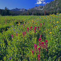 Wildflowers in Beehive Basin, near Big Sky, Montana.