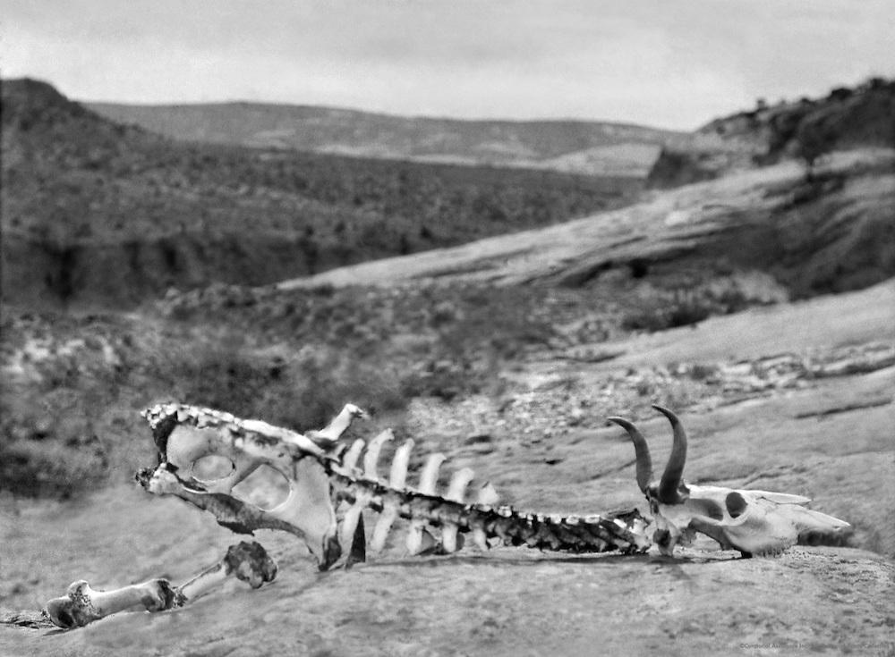 Desert Hills, Arizona, 1926