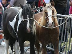 Wickham Horse