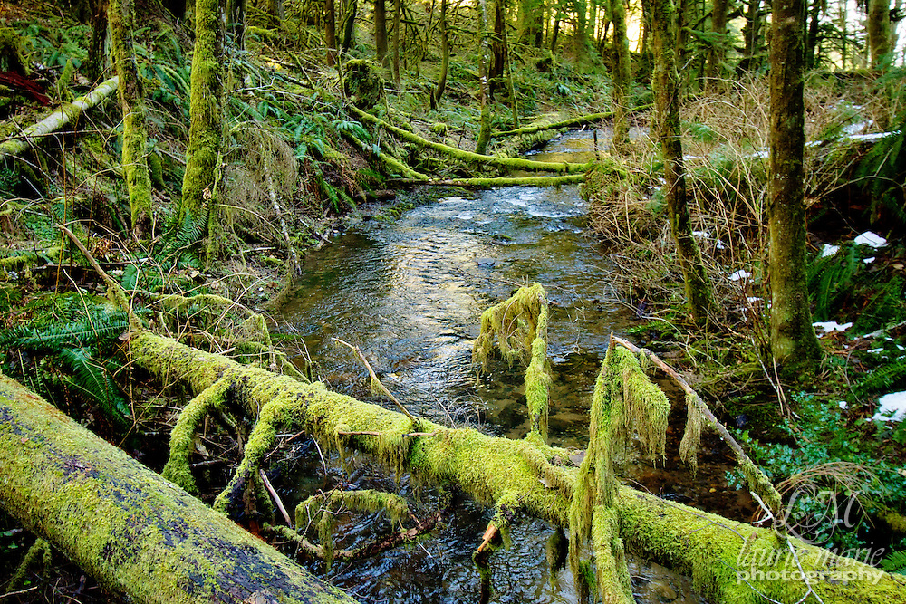 Shellburg Creek
