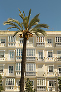 View of building exterior with palm tree in foreground, Cadiz, Andalusia, Spain