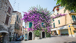 Flowers overtaking a house in Sirmione by Lake Garda, Italy. 20/06/14. Photo by Andrew Tallon