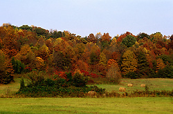 TN: Tennessee Great Smoky Mountains National Park, Mtns, Cades Cove, Fall color          .Photo Copyright: Lee Foster, lee@fostertravel.com, www.fostertravel.com, (510) 549-2202.Image: tnsmok213