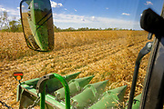 30 SEPTEMBER 2020 - WOODWARD, IOWA: The heads on the combine running through the cornfield on Lambert family land in Woodward. Kevin Lambert said it would take nearly twice as long to combine this year's corn compared to last year's because of damage to fields caused by the derecho wind storm that roared through central Iowa in August. The derecho wind storm damaged more than 550,000 acres of Iowa cornfields. In addition to derecho damage, Iowa farmers are wrestling with drought related damage. A persistent drought in central Iowa has stunted corn plants and reduced yields. Because of the unusually dry weather, this year's harvest is three weeks ahead of last year's and nine days ahead of average.       PHOTO BY JACK KURTZ
