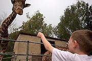 Child Feeding a Giraffe