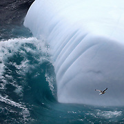 A seagull flies by an iceberg floating along the Atlantic Ocean cliff coast at Signal Hill in St. John's, Newfoundland and Labrador, Canada, on Monday, June 3, 2019. THE BLADE/KURT STEISS <br /> MAG NewfoundlandXX