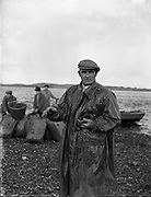 Mussel Farming at Mornington, Co. Meath - Mr Patrick Mulhern.08/11/1957