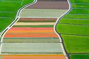 Nederland, Zuid-Holland, Gemeente Teylingen, 09-04-2014; Bloembollenvelden op geestgrond temidden van de weilanden in de Polder Elsgeest vormen een abstract bloementapijt.<br /> Bulb fields in the middle of the meadows in the polder form an abstract floral border like a rag rug.<br /> luchtfoto (toeslag op standard tarieven)<br /> aerial photo (additional fee required)<br /> copyright foto/photo Siebe Swart