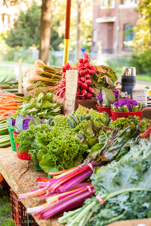 A colourful table of assorted vegetables at a farmers market on a sunny day in Toronto.