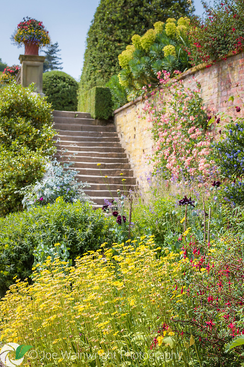 Anthemis and fuchsia are among the profusion of plants at the foot of steps between terraces, in the gardens of Powis Castle, Welshpool, Mid Wales.  Photographed in July.