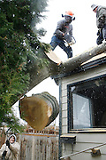 Victor Sandoval, bottom left, braces while holding onto a rope as snow flurries fall on Christmas while working with Uvaldo Rivera, top left, and Rogelio Velasquez to remove a tree that fell on Enrique and Carmen Moreno's Kennewick home during last Monday's wind storm. Expect cloudy conditions today, with highs in the mid 30's and a chance of snow and rain showers throughout the day, according to the National Weather Service.