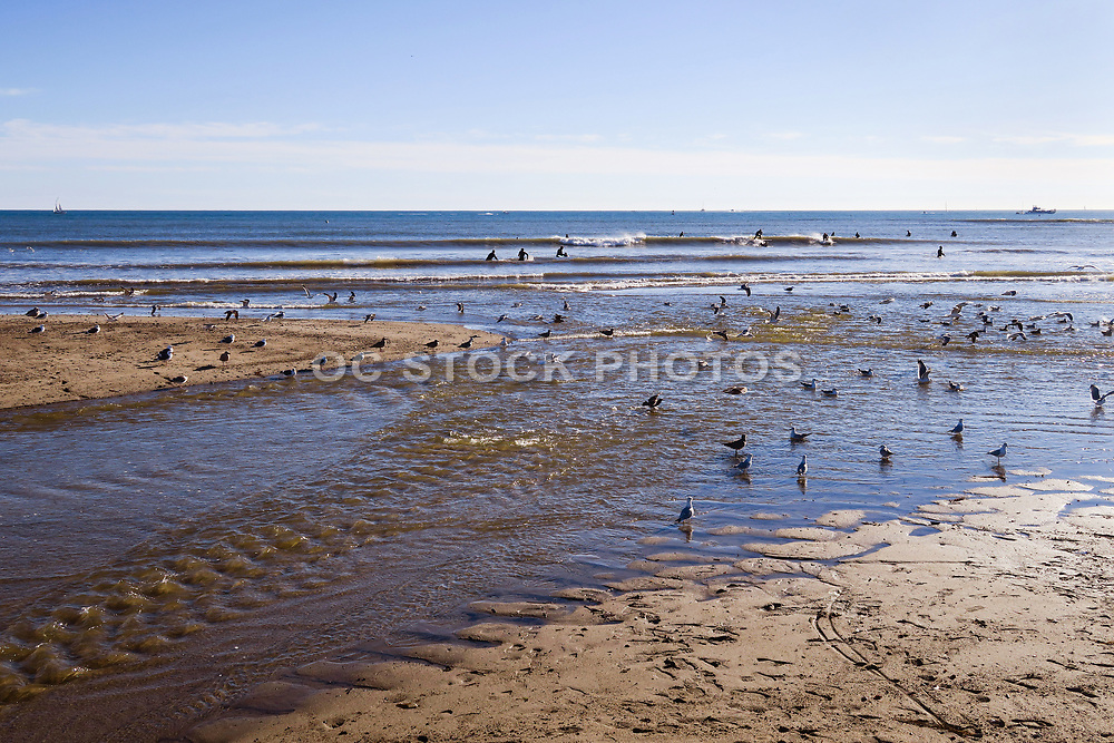 Seagulls Hanging in the Rivermouth at Doheny State Beach