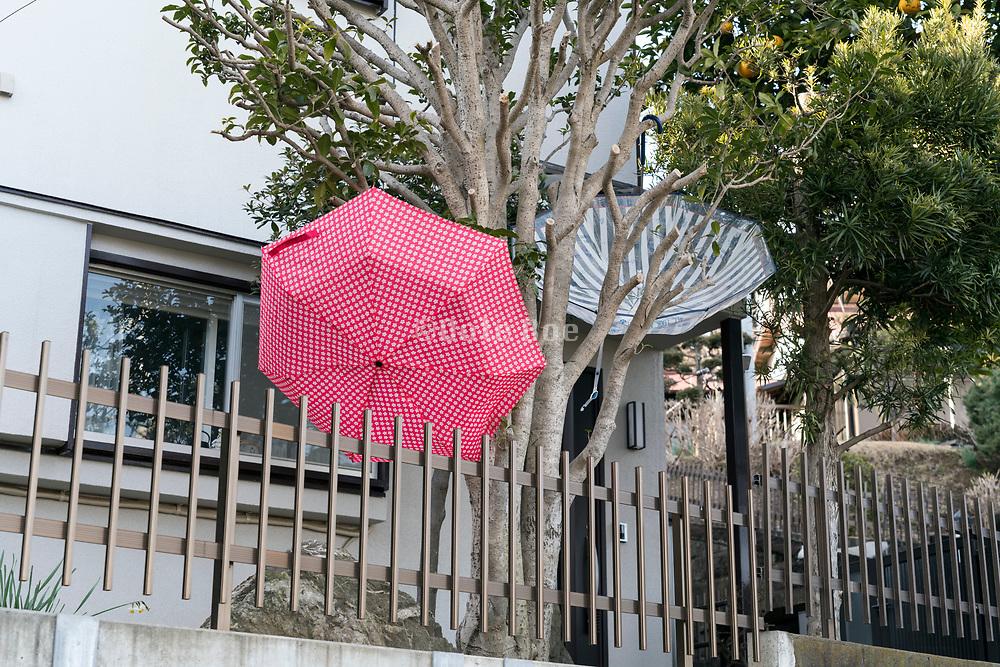 open umbrellas hanging to dry in a tree Yokosuka Japan