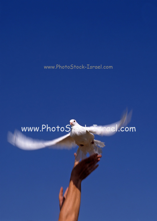 A hand sends off a Flying white dove on blue sky background