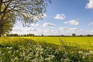 11-05-2020: Nijeholtwolde, Weststellingwerf - prachtige velden en landschappen