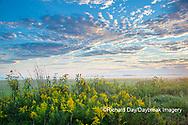 63893-03711 Sunrise and prairie Prairie Ridge State Natural Area Marion Co. IL