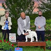 Del Sur Kennel Club 05/02/2021