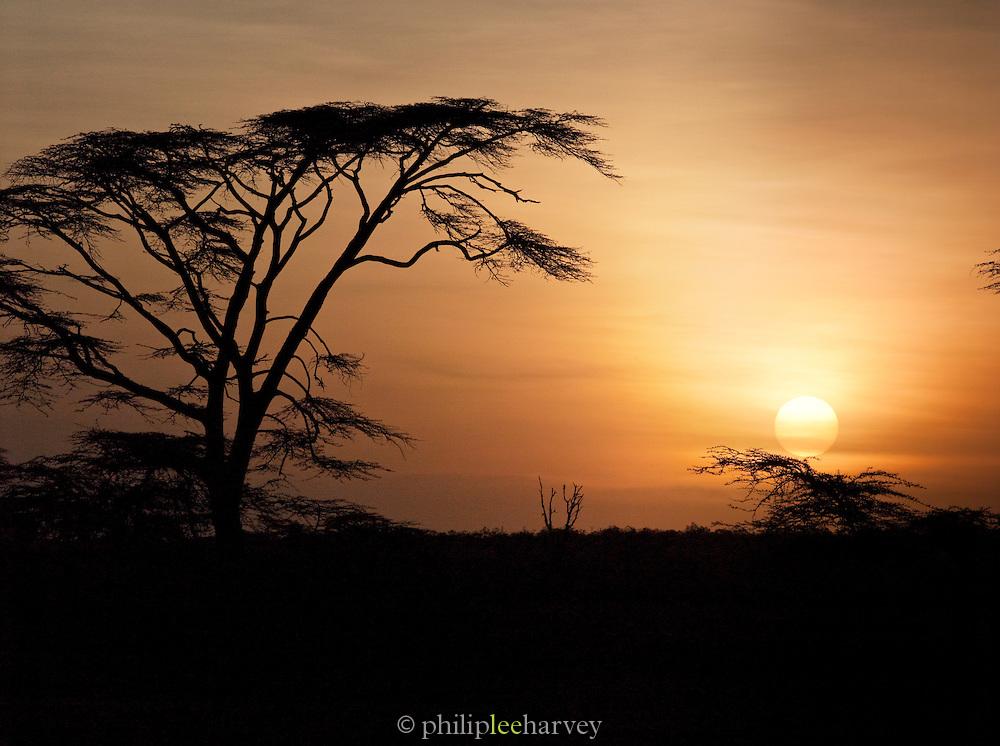 Silhouette of Acacia Tree at sunset near the village of Oyaratta, Maasai Mara, Kenya