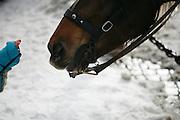 Wednesday February 6th 2008..Megeve, France. Haute Savoie.