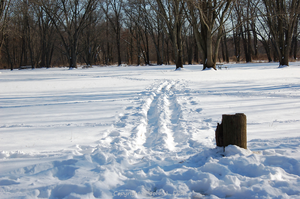 Footsteps/path in the snow leading to trees