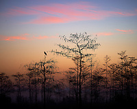 Crow Waiting For the Sun at Big Cypress Swamp National Preserve in Florida. Image taken with a Nikon Df camera and 80-400 mm VRII lens (ISO 100, 160 mm, f/8, 1/20 sec).