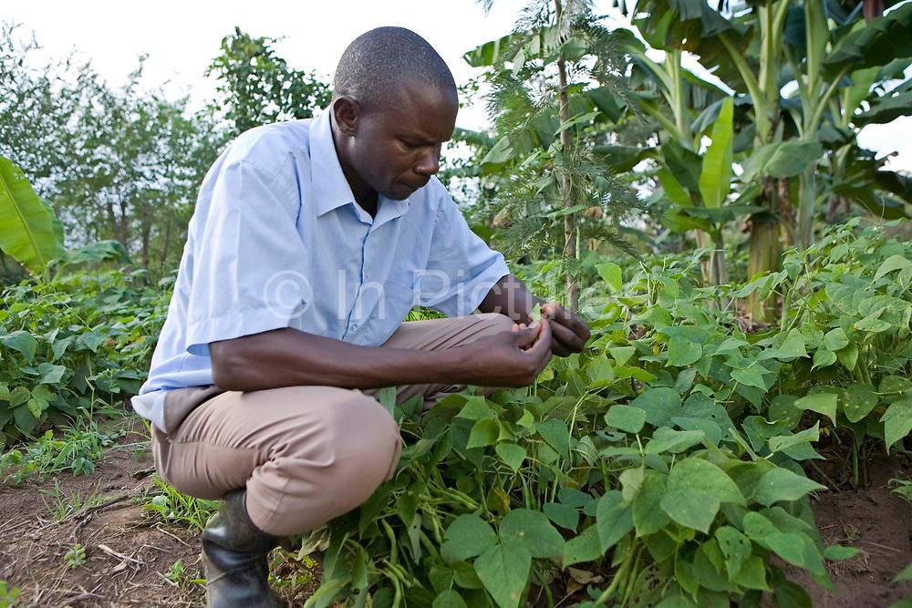 A Kulika trained farmer in Uganda tends to his crops.