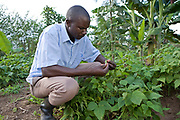 A Kulika trained farmer in Uganda tends to his crops.