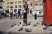 People versus pigeons in the City of London, UK. On this street corner a crowd of pigeons is pecking away feeding on some grains, while city workers files past. The scene is almost like 'them and us'.