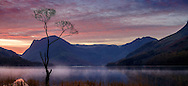 The Lone Tree during an autumn Sunrise, Buttermere Lake, Lake District, Cumbria, UK
