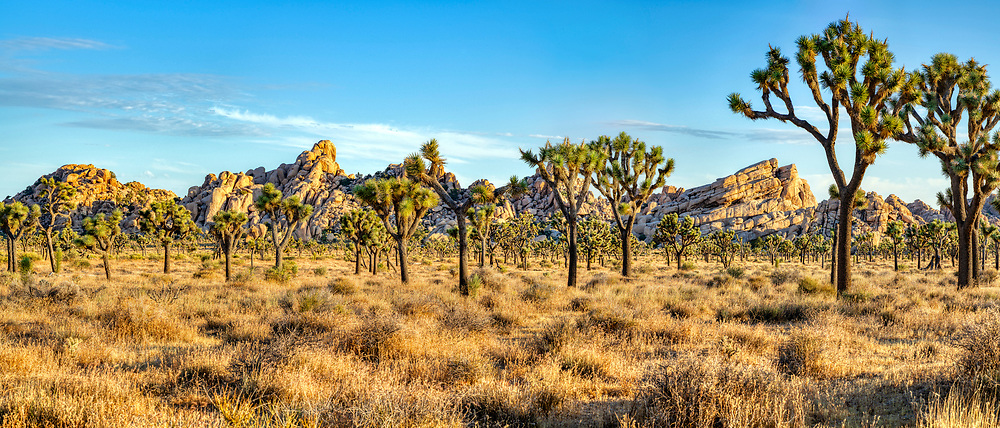 Just after sunrise in Joshua Tree National Park