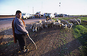 Goat herders on the Moroccan roadside interested in the Rally cars stopping to fix one of numerous faults on the battered cars