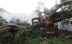 A large tree split open by the winds of Hurricane Irma is seen at the Salvation Army headquarters in Fort Lauderdale, FL, USA on Monday, September 11, 2017. Photo by Joe Cavaretta/Sun Sentinel/TNS/ABACAPRESS.COM