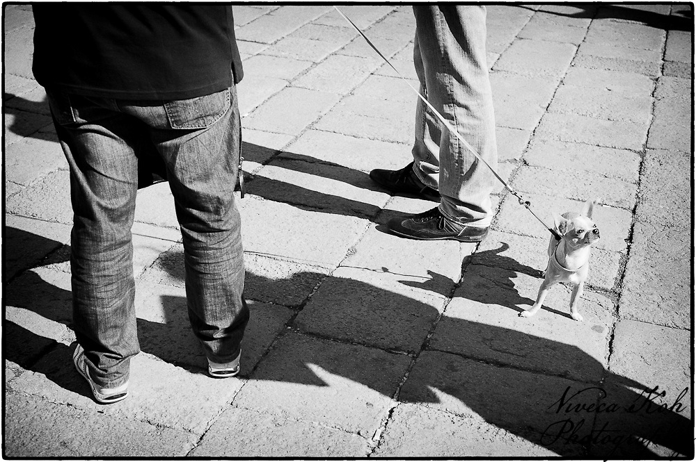 Small dog with owners legs