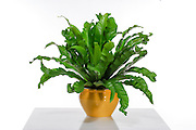 Houseplant On table and white background