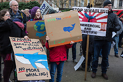 London, UK. 26th January, 2019. Animal rights campaigners prepare to take part in the Japan: No Whaling march from Cavendish Square to the Japanese embassy following Japan's announcement that it withdraw from the International Whaling Commission (IWC) and resume commercial whaling with effect from July 2019. The march was organised by the London Committee for the Abolition of Whaling.
